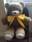 One beloved Teddy